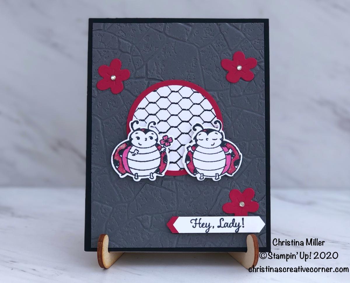 Hey, Little Ladybug!